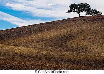 Farm Field - Lonely tree on farm field. Alentejo, Portugal