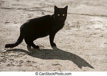 Black cat with yellow eyes and big shadow