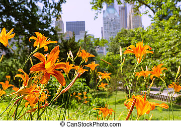 Central Park Manhattan New York US - Central Park flowers...