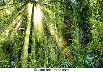 sunlight in dorrigo world heritage rainforest - sunlight in...