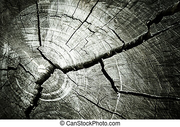texture of growth rings tree for background with vintage...
