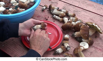 preparing edible mushroom fungi cep boletus on table in farm