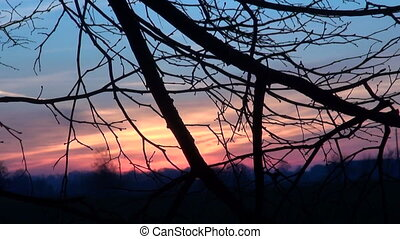 branch and sunrise sunset sky - autumn tree branch and...