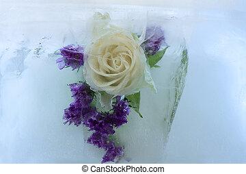 Frozen flower of rose - Frozen fresh beautiful flower of...