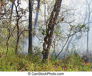 Wildfire in Chitwan, Nepal - Wildfire in National park...