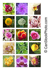 Flowers - Various colorful flowers on a collage