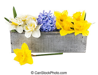 Spring flowers in wooden box Isolated on white background