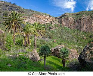 Gran Canaria, Calder de Bandama after winter rains - Gran...