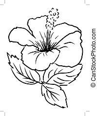 hibiscus - sketch, cartoon illustration of hibiscus