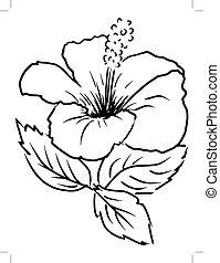 hibiscus - sketch, cartoon illustration of hibiscus