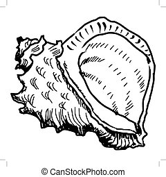 sea shell - hand drawn, sketch, doodle illustration of sea...