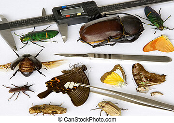 Entomology - Image of a typical entomologist\'s work table.