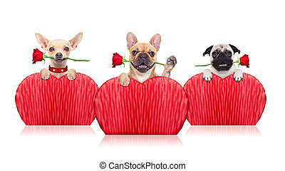 valentines dogs - valentines group of dogs holding a red...