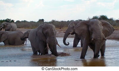 Elephant family bathing action in a