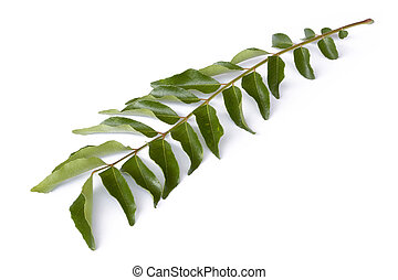 Curry Leaves - Isolated image of curry leaves.