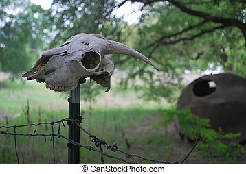 Goat head. - A goat\'s skull atop a fence post in Texas,...
