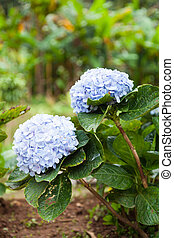Purple flowers. Small flowers in the garden of a small...