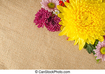 Full color flowers - Image of full color flowers on brown...