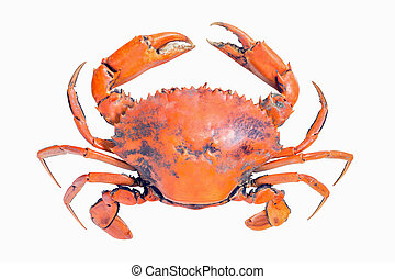crab isolated on white background - Cooked whole mud crab