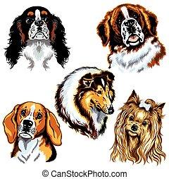 cachorros, cabeças,