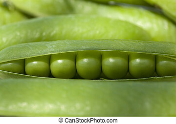 green peas - Freshly picked green peas in open pods