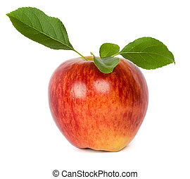 ripe fresh red apple with leaf isolated on white Note to editor: