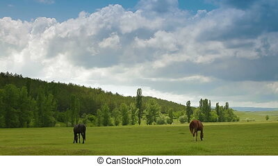 Summer landscape with grazing horses in a meadow