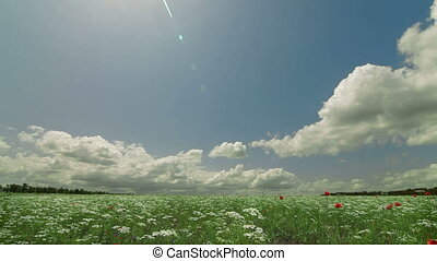 Summer landscape with blooming meadow and fluffy clouds in the sky