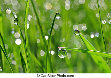 dew drop closeup - Fresh green grass with dew drop closeup...