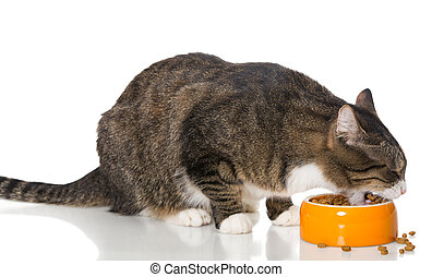 Gray striped cat eats dry food, isolated on white