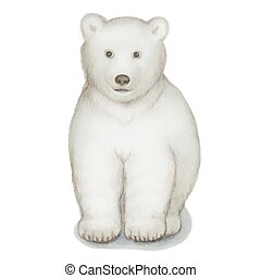 Polar bear, watercolor vector illustration Isolated on a...