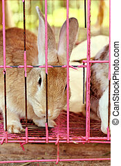 White striped rabbit in a cage. - White striped rabbit in a...