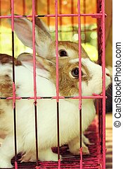 White striped rabbit in a cage - White striped rabbit in a...