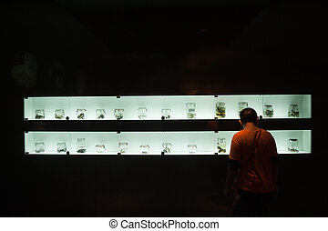 Collection of preserved reptiles and bones in Musium