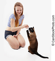 cat begging for a treat - siamese cat sitting up and begging...