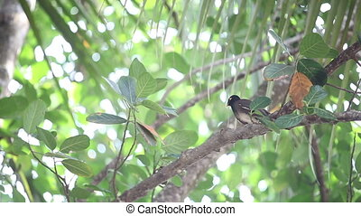 Indian woodpecker perched on tree