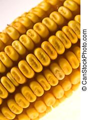 Corn Corncob - Yellow Corncob isolated on white