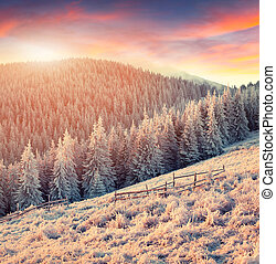 Colorful winter landscape in mountains.