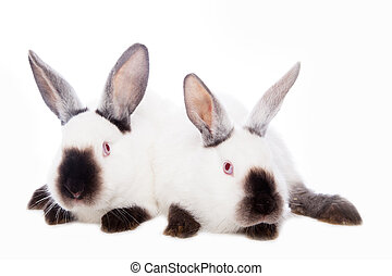 Cute rabbits sitting against the white background