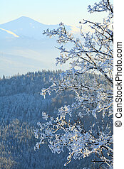 rime covered trees in winter mountain - winter calm mountain...
