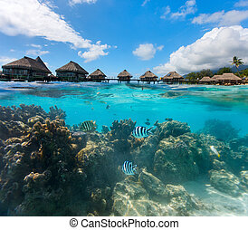French Polynesia above and bellow water - Beautiful coral...