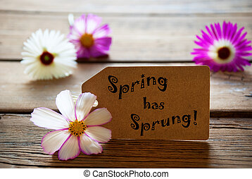 Label With Text Spring Has Sprung With Cosmea Blossoms -...