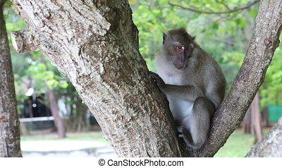 monkey sit on tree - big grey monkey sit and turn on...