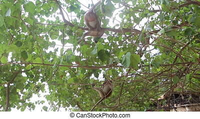 monkey sit on tree - big monkey sit on a tree and small...
