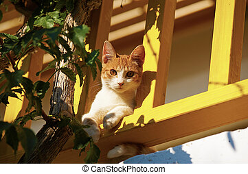 The cat lies on a balcony