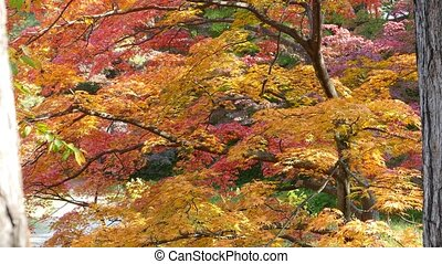 Autumn color of pond, Karuizawa, Nagano, Japan for adv or...