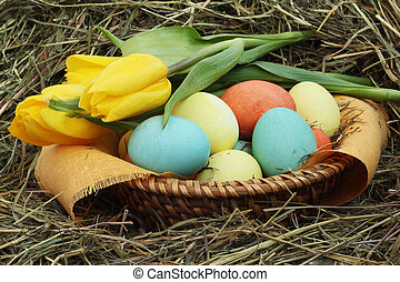 Basket of easter eggs and tulips on hay - Basket of colored...