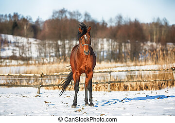 馬, 冬天, 海灣