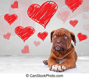 puppy looking up to heart shapes for valentines day - cute...