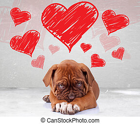 shy love of a dog de bordeaux puppy wit adorable face on...